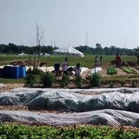 Youth Urban Farm Co-operative