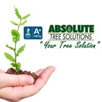 Absolute Tree Solutions