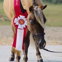 Ramblin Ranch - Miniature Horses and Sheep