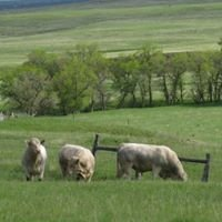 Valley View Charolais Ranch