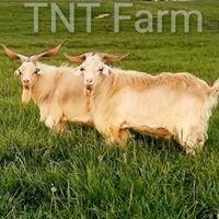 TNT Farm