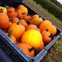 Farmer Paul's Pumpkins