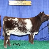 Johnson Shorthorns