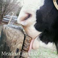 Meadow Creek Farm, LLC & Calm Acres