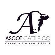 Ascot Cattle