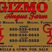 Gizmo Angus Farm