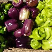 Code's Corner Organic Farm