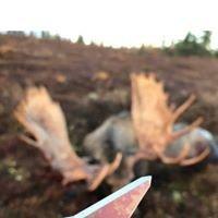 Helix broadheads  by Strickland's Archery