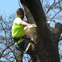 Jeff Hoheisel Professional Tree Care