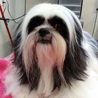 Paw'sh Pet Salon-Corinne Miklos