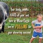 Wiese Cattle
