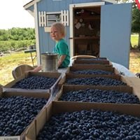 Wilson Blueberries- Closed for the Season