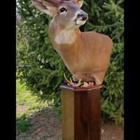 Gibson's Taxidermy