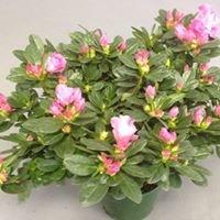 Keepsake Plants Leamington