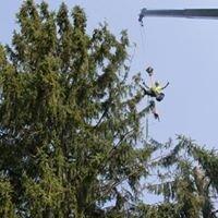 Bisping & Seyler Tree Service LLC