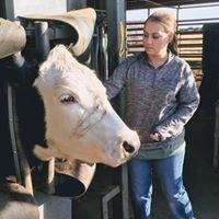 Sandy Creek Veterinary Care