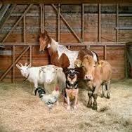 Staples Veterinary Clinic