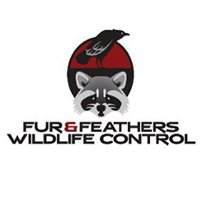 Fur & Feathers Wildlife Control