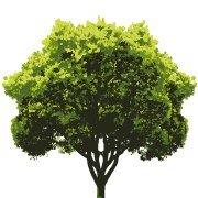 Baum- und Gartenpflege Winter