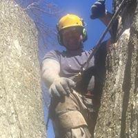 Tim's Tree Service