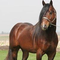 Meyer Horse Co