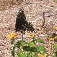Rich Lubke Community Organic Garden in Lewisville