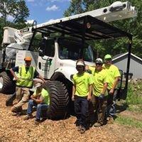 Distinctive Tree Care LLC