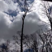 Holland Tree Services LLC