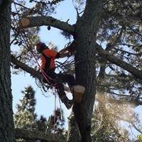 Arborcare Tree Company Ltd