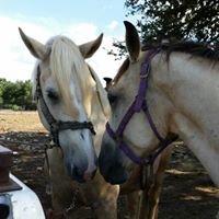 The Farmyard Pony & Horse Rides-Pet-N-Zoo