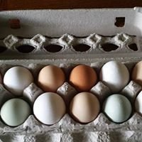 Arcadia Hill Farm/ Laura's Eggstraordinary Pastured Chickens