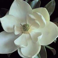 Steel Magnolias Salon & Spa