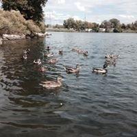 Merritt Point Park