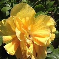 Curry's Nursery & Floral