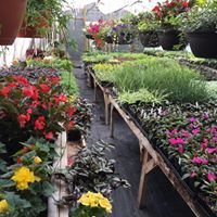 Flower House Florist & Garden Design