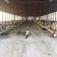 Loudenbeck Farms Dairy Goats LLC