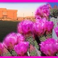 Desert Rose Landscaping