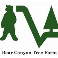 Bear Canyon Tree Farm
