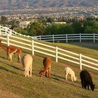 The Alpaca Hacienda