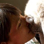 Holistic Vet Dr. Laurel Davis - Listen to Your Animal - Sunvet