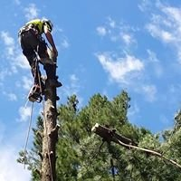 Gippsland arboriculture specialist