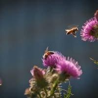 Boernsen Bees Honey