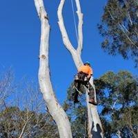 Bradshaw Tree Services