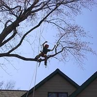 Northern Tree Specialists