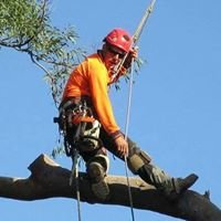 B Double M Tree Services