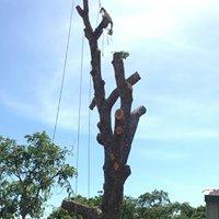 Cape York Tree Specialists