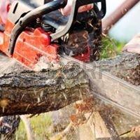 Bundy & Bargara Tree Service