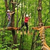 Tree Top Trekking