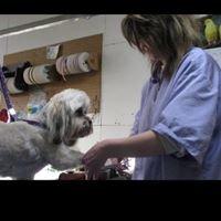 Northeast Pet Grooming
