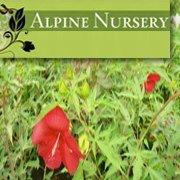Alpine Nursery